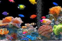 Где узнать о проектировании аквариумных систем?